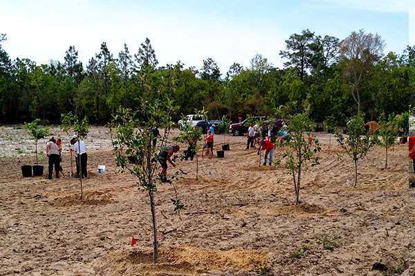 Citrus County FL Plant Tree Nursery